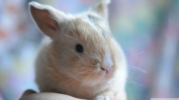 Обои Маленький рыжий кролик