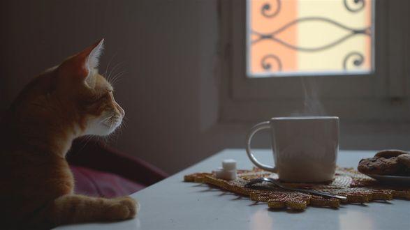Обои Рыжий кот и чашка кофе на столе