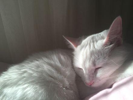 Обои Сладко спящий кот
