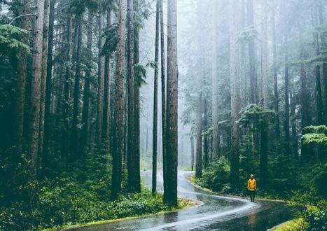 Обои Человек в желтом комбинезоне стоит в лесу на дороге под дождем