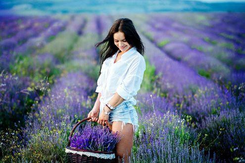 Обои Девушка в белой рубашке и джинсовых шортах стоит с корзиной сиреневых цветов слегка склонив голову и улыбаясь. На заднем плане поле с мелкими сиреневыми цветами. Фотограф Анна Асланян