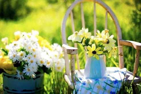 Обои Букеты цветов стоят в ведерке и на стуле, освещенные летним солнцем