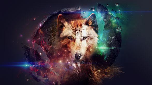 Обои Волк на абстрактном космическом фоне