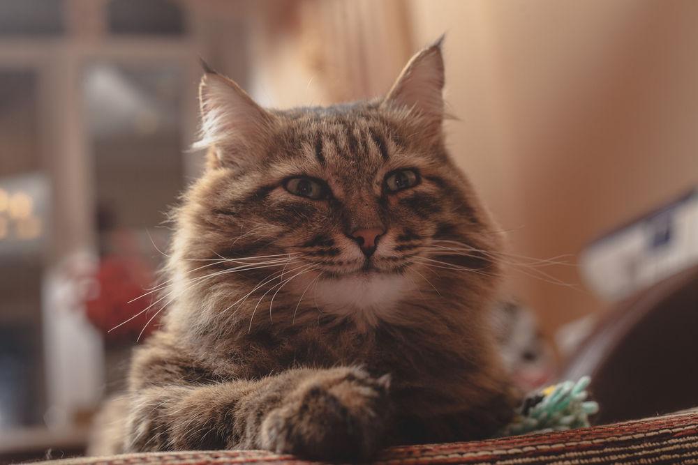довольный кот фото