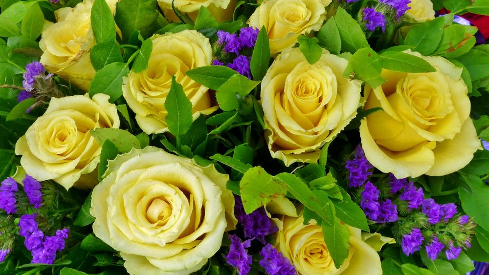 красивые жёлтые розы картинки