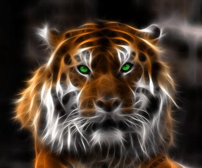 Обои Огненный тигр с зелеными глазами