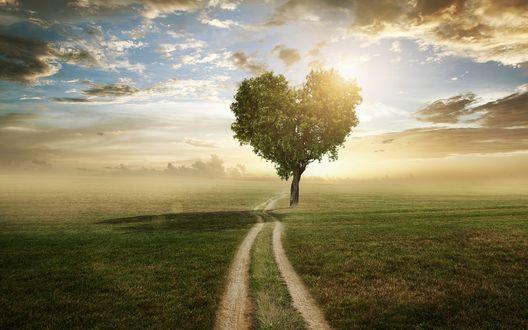 Обои Дорога проходящая рядом с деревом с кроной в виде сердца