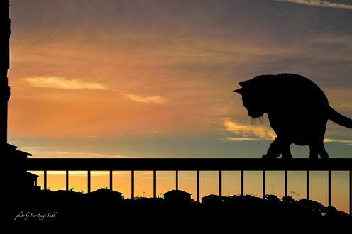 Обои Силуэт кота, сидящего на перилах балкона на фоне неба, ву Pier Luigi Saddi