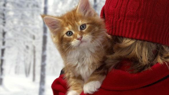 Обои Красивый рыжий котенок на плече у девушки