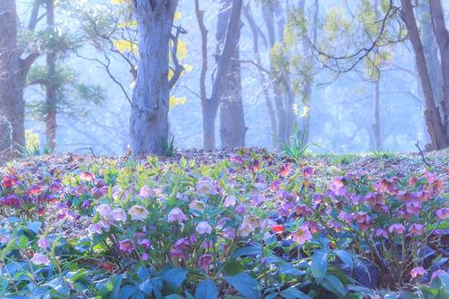 Обои Освещенные солнцем цветы в лесу