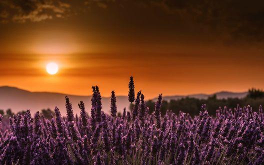 Обои Лавандовое поле на закате дня