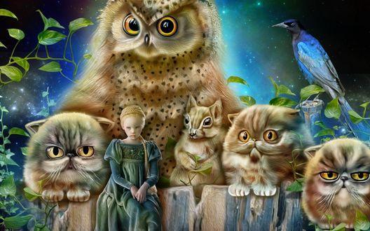 Обои Девочка рядом с котятами, белкой, совой и птицей