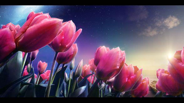 Обои Розовые тюльпаны под облачным небом, by RazielMB