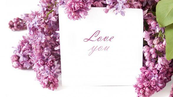Обои Букет сирени с любовным посланием Love you / Люблю тебя