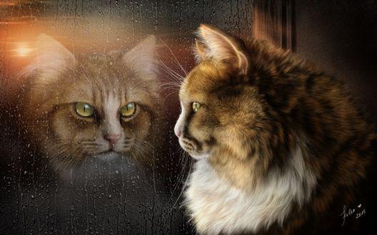 Обои Кот сидит у окна покрытого дождевыми каплями и смотрит на свое отражение