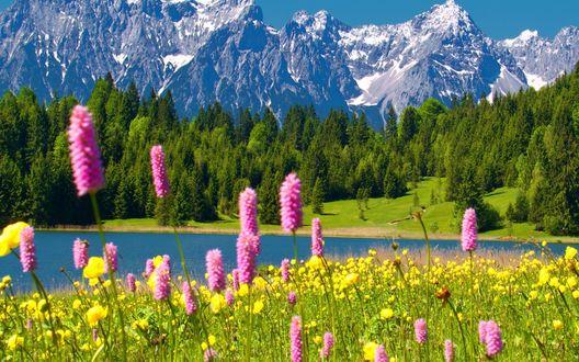 Обои Розовые и желтые цветы на фоне гор и леса
