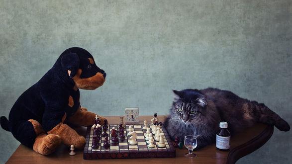 Обои Кот играет с плюшевой собакой в шахматы