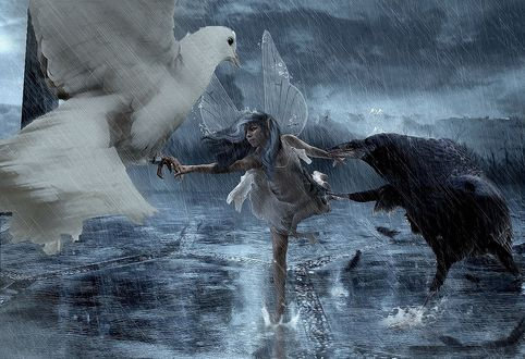 Обои Девушку эльфа под проливным дождем, тянут за руки в разные стороны белый голубь и черный ворон