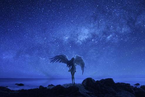 Обои Кукла ангел на фоне звездного неба, фотограф Ateens Chen