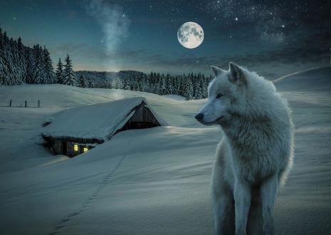 Обои Волк стоит на фоне заснеженного дома и неба с полной луной, annewipf