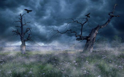 Обои Птицы сидят на засохших ветвях дерева среди тумана