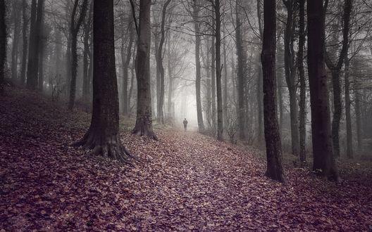 Обои Человек идет по дороге через осенний лес окутанный туманом