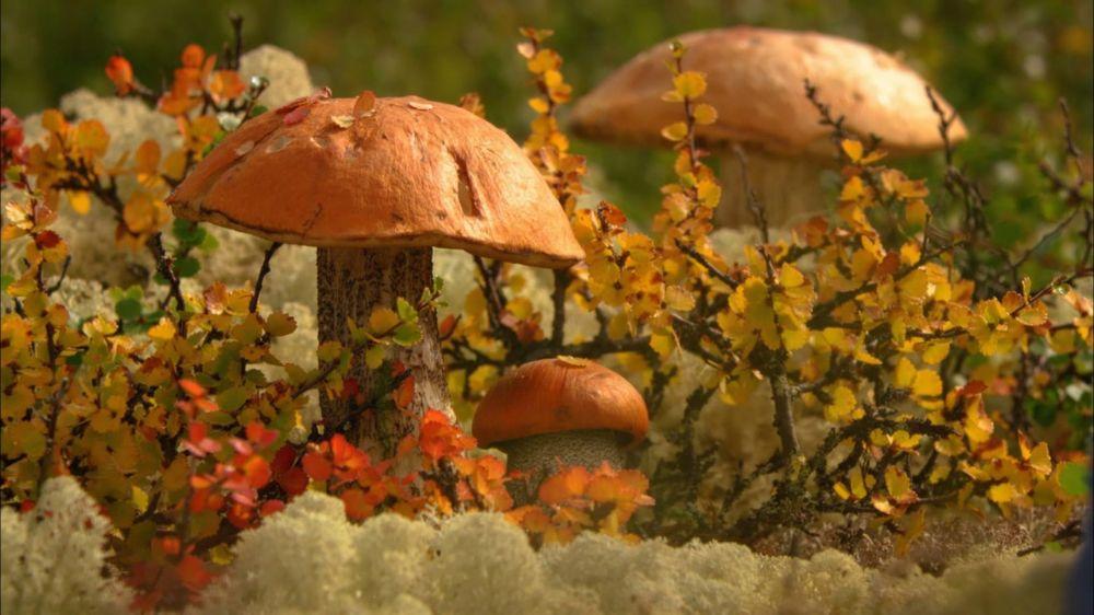 Широкоформатные обои на рабочий стол осенние листья