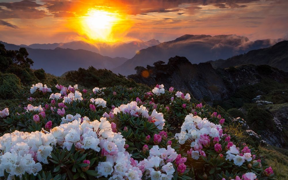 обои цветы на рабочий стол букеты цветов красивые