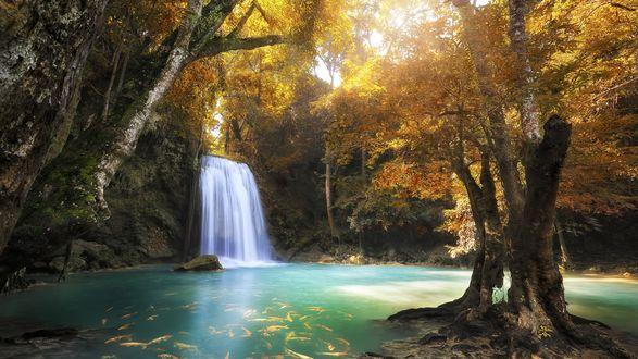 Обои Водопад Эраван в осеннем лесу, в котором плавают золотые рыбки, провинция Канчанабури, Таиланд