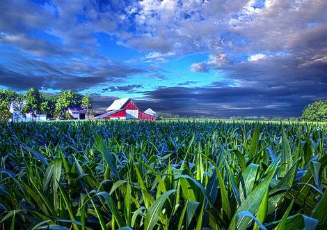 Обои Яркая растительность под облачным небом, фотограф Phil Koch