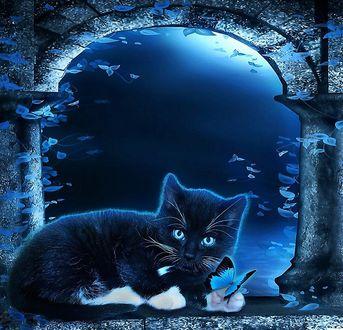 Обои Черно белая кошка с голубыми глазами лежит напротив каменной арки, с черно голубой бабочкой на лапе, на фоне ночного неба летает множество бабочек