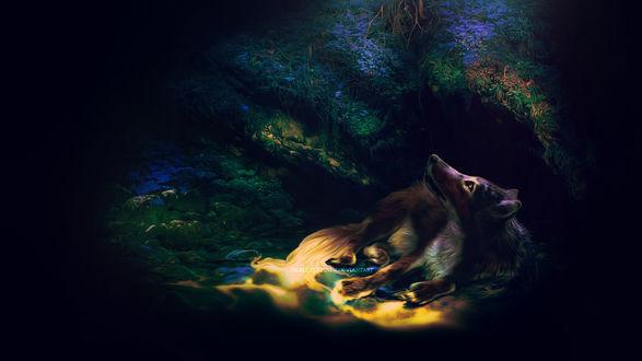 Обои Волк лежит в яме, освещаемый лучами солнца, ву Deadlylupine