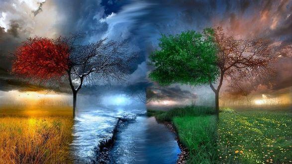 Обои Осеннее дерево, растущее в поле, переходящее в зиму, зима, переходящая в весну и весна в лето