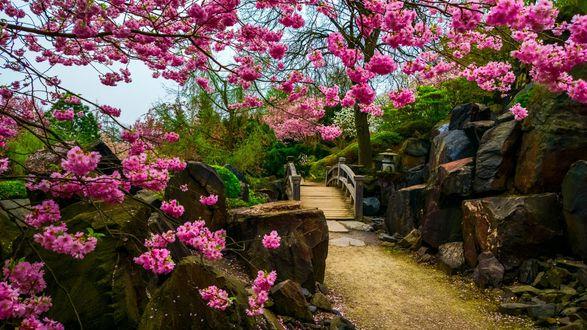Обои Красивый японский сад