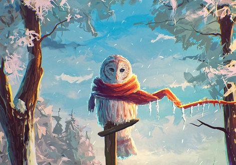 Обои Замерзшая сова с шарфиком вокруг шеи, сидит на деревянном столбике, by Sylar113