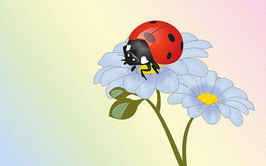 Обои Божья коровка сидит на лепестках голубых цветов