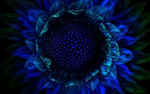 Обои Синий цветок с крупными семенами внутри