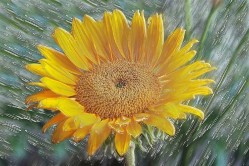 Обои Желтый цветок на фоне абстракции