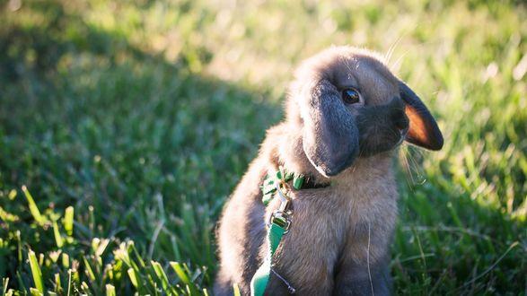 Обои Лопоухий кролик сидит в траве