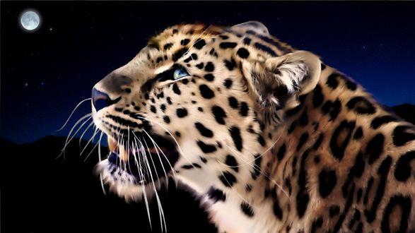 Обои Арт леопард на фоне ночи