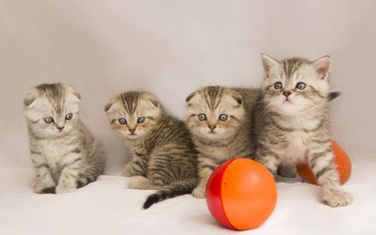 Обои Милые полосатые котята и мяч