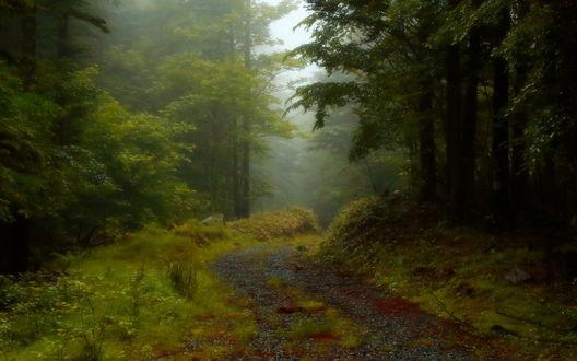 Обои Среди тумана в лесу проходит дорога
