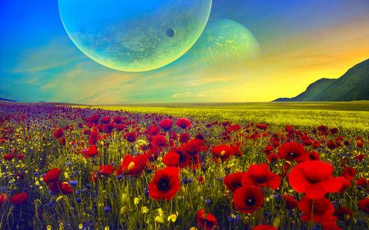 Обои Маковое поле на фоне планет