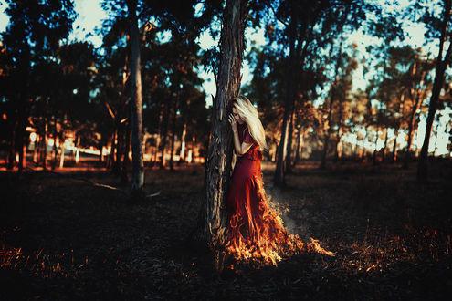Обои Девушка с горящим платьем прислонилась к дереву, by Ronny Garcia