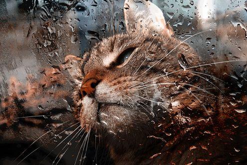 Обои Грустный кот за оконным стеклом в каплях дождя