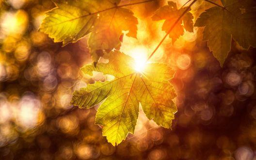 Обои Осенние листья на фоне бликов