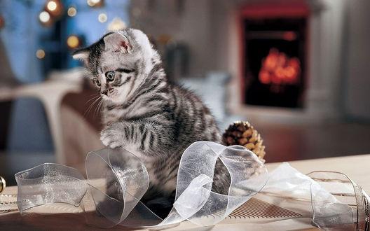Обои Полосатый котенок играет с ленточкой