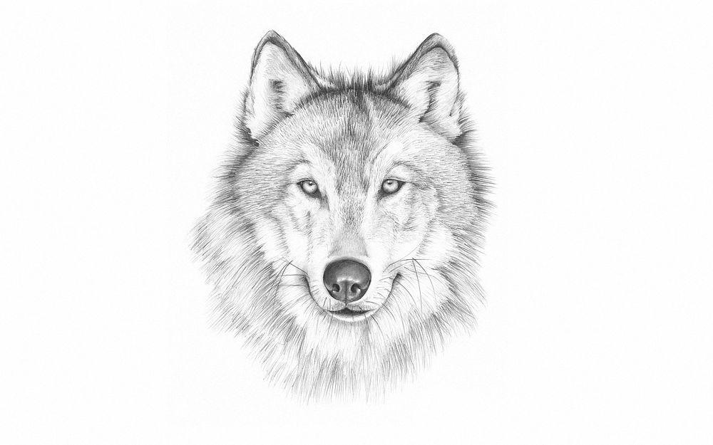 картинки волки рисунки