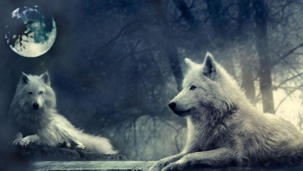 волк и луна картинки - фото 9