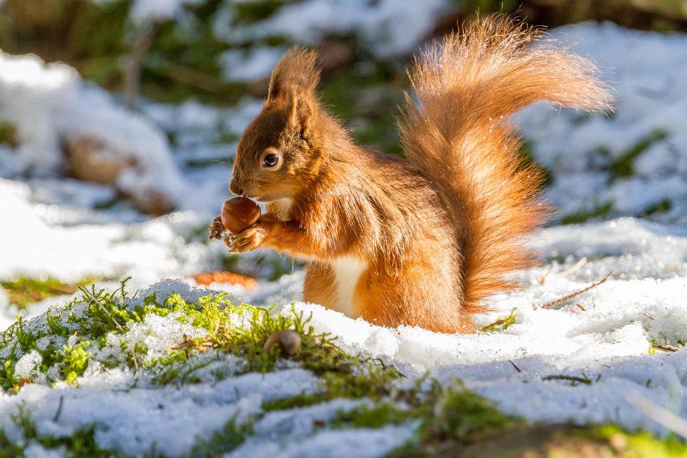 картинки весна животные на снегу надела